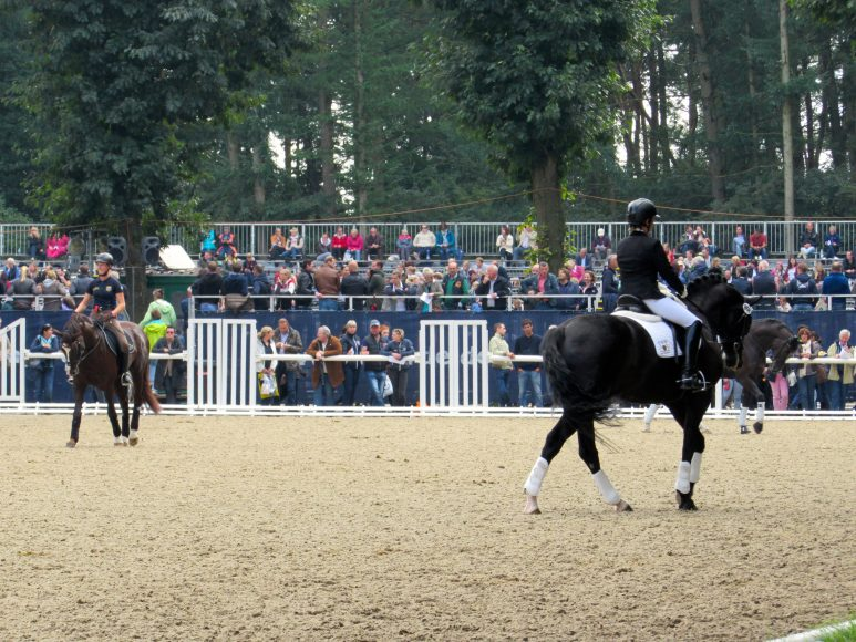 Dressage Warm-Up DKB Bunderchampionate 2015