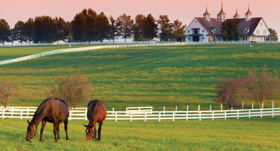 Kentucky-Horse-Farm-1