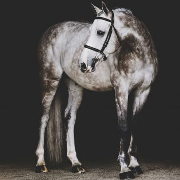 Equestrian Photography Holly Casner