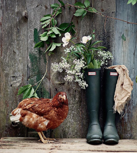 country chic Mountain Homesteader