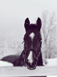 winter equestrian photo