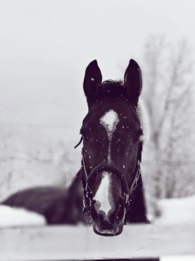 DAY IN THE LIFE: Winter Weather Equestrian