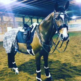 equine style favorites